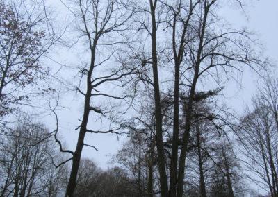 Třeboňské veverky, ořezy - Údržba musí být